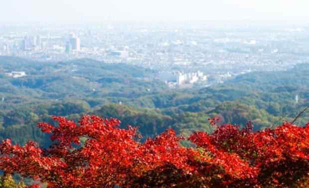 高尾山の紅葉平